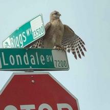Bird-on-sign-Yvonne-Rosen